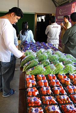 หนุนเกษตรอินทรีย์ หลังตลาดยุโรปนิยม