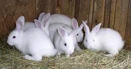 เลี้ยงกระต่ายแบบไม่ตามกระแส