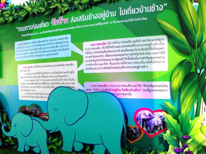 """ถึงเวลาเหลียวมอง """"ช้าง"""" สัตว์ทรงคุณค่าของไทย"""